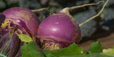 turnips-2097780_960_720