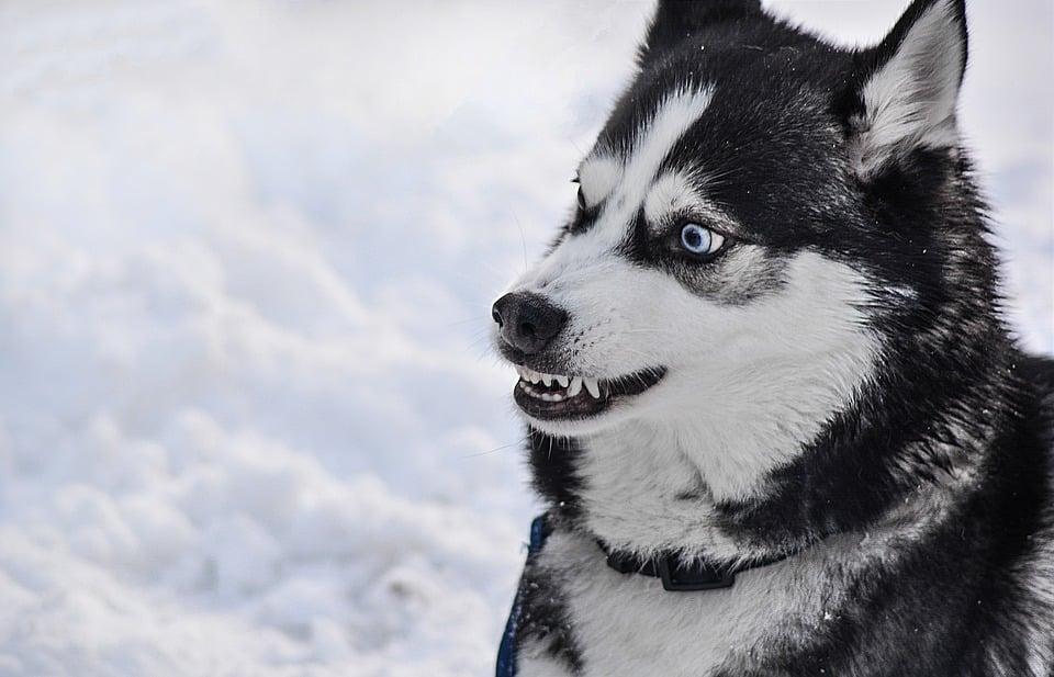 dog-2414477_960_720